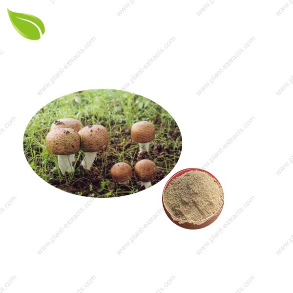 Agaricus Blazei Murill Powder