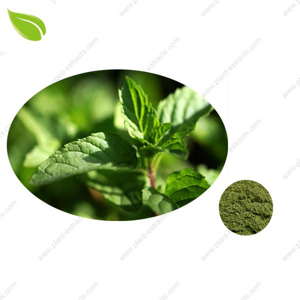 Mint Seasoning Powder